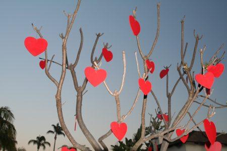 Valentijnsdag Loosdrecht